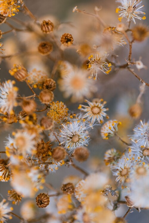 Taide valokuvaus Dry plants with orange tone