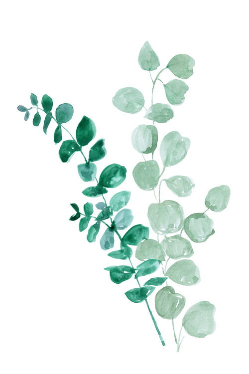Illustration Eucalyptus two ways