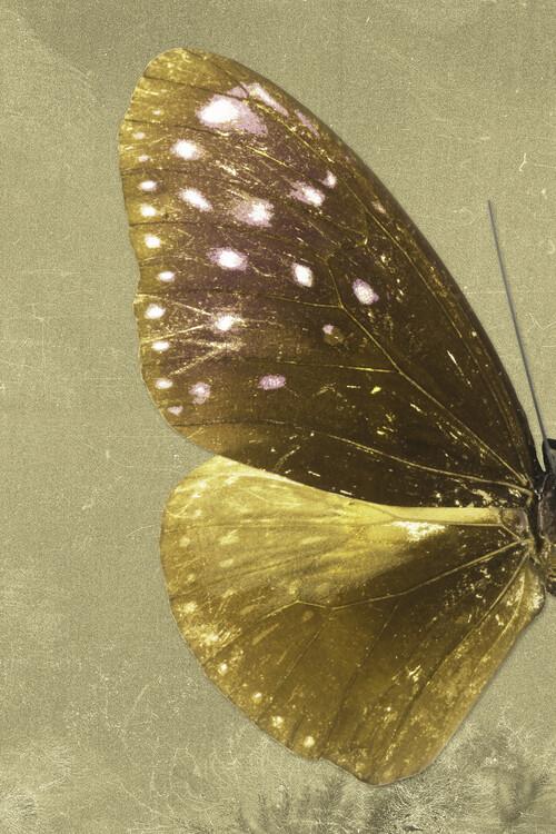 Art Photography EUPLOEA PROFIL - GOLD
