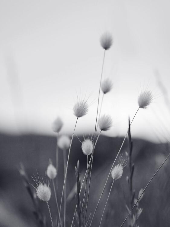 Art Photography Field Grass