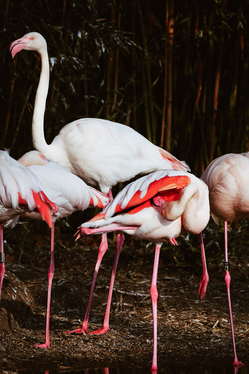 Taide valokuvaus Flamingo Budies