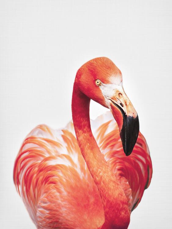 Art Photography Flamingo
