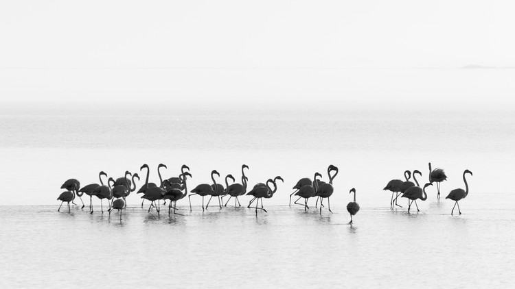 Art Photography Flamingos