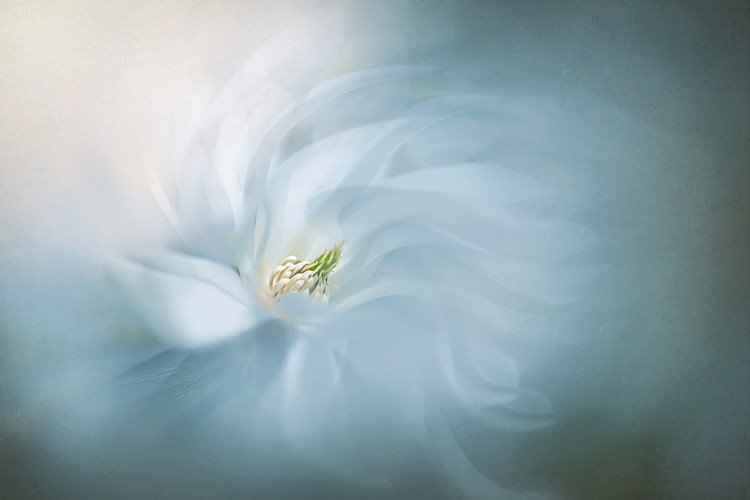 Art Photography Floral Ballet