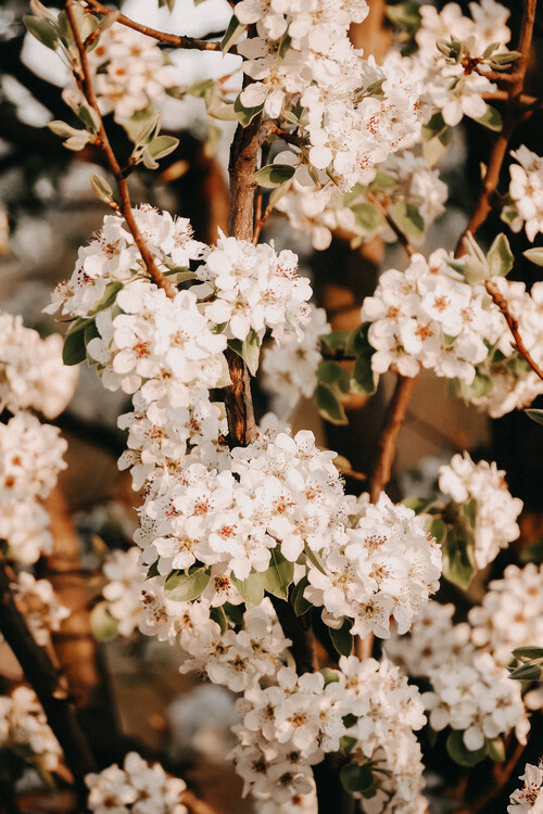 Taide valokuvaus Flower madness