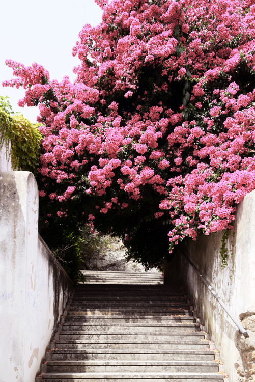 Art Photography Flowery Staircase