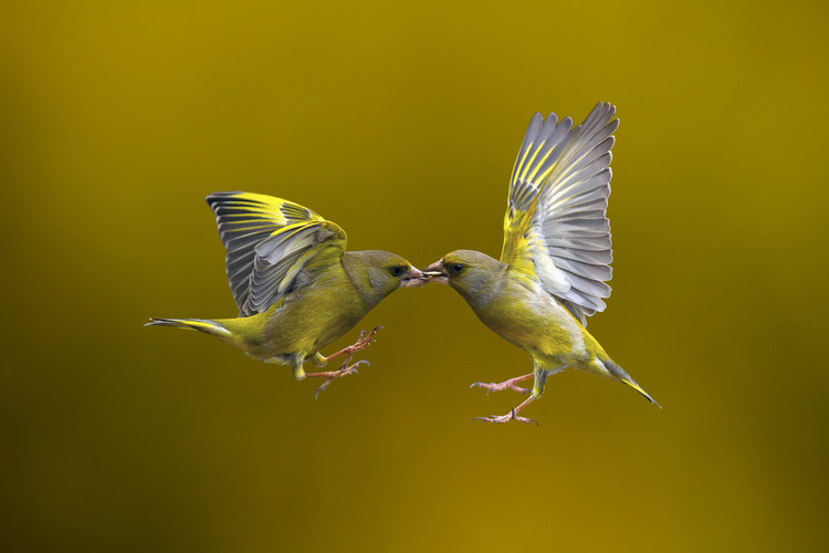 Art Photography Flying Kiss