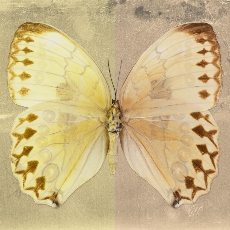 Art Photography FORMOSANA SQ - YELLOW & DARK BEIGE