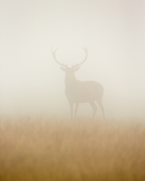 Art Photography Ghost Stag