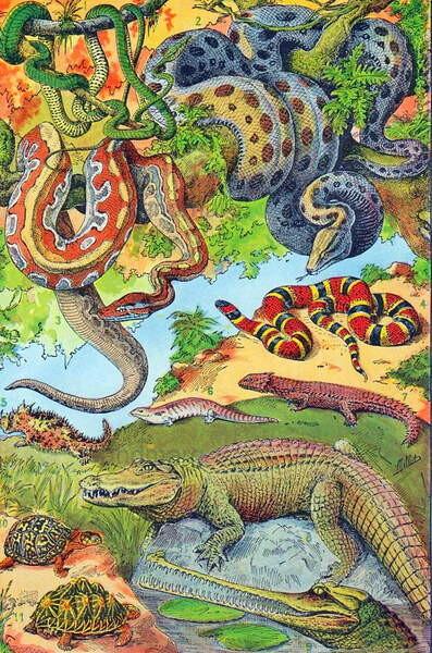 Fine Art Print Illustration of  Reptiles  c.1923
