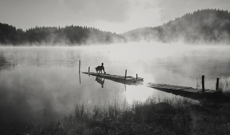 Art Photography In the fog