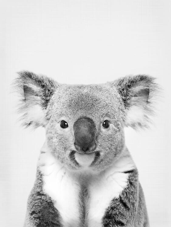 Art Photography Koala