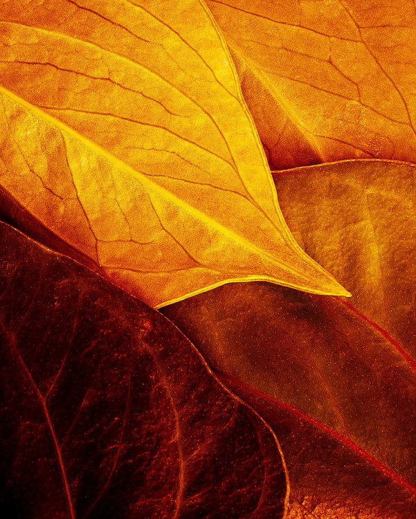 Art Photography Leaves