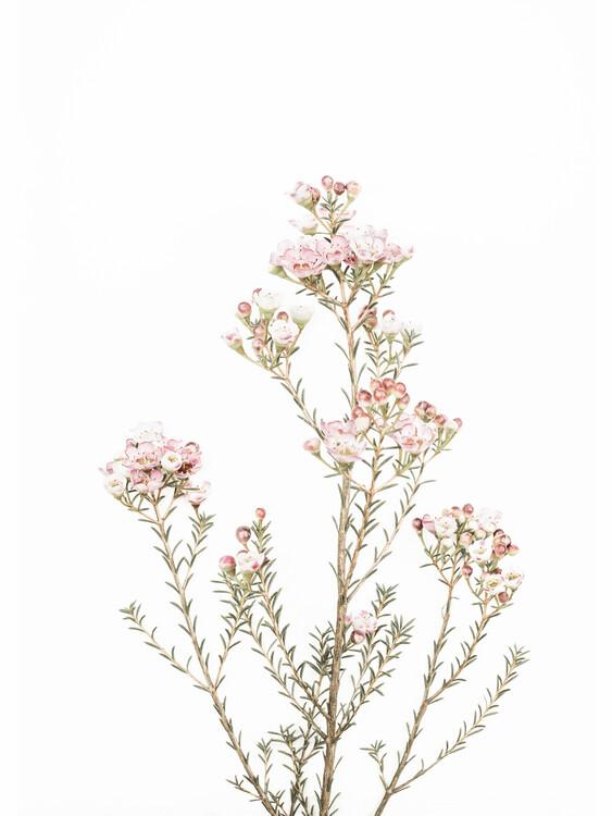 Art Photography Little Blooms