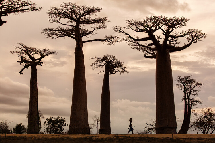 Art Photography Madagascar