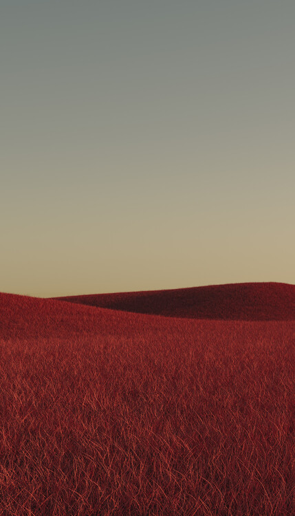 Art Photography Minimal landscpases of a red grass at with a gradient sky series 1