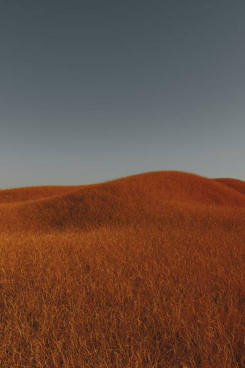 Art Photography Minimal landscpases of a red grass at with a gradient sky series 4