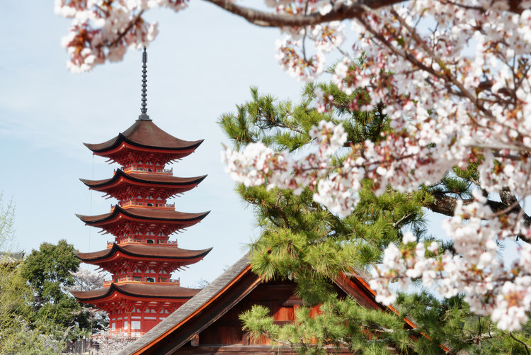 Art Photography Miyajima Pagoda with Sakura