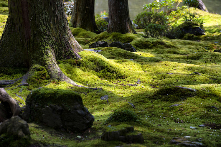 Art Photography Moss Garden