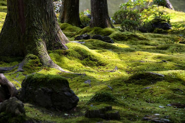 Art Photography Moss Garden