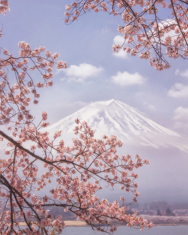 Art Photography Mt. Fuji in the cherry blossoms