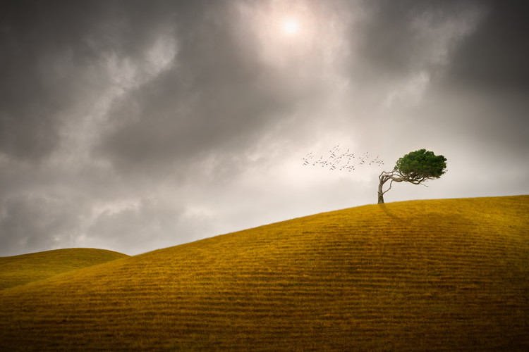 Art Photography One Tree Hill
