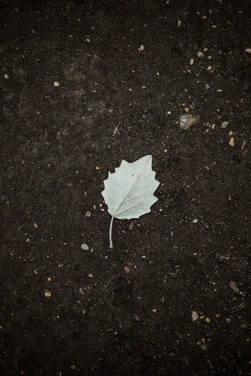 Art Photography One white leaf on the black terrain