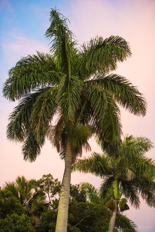 Taide valokuvaus Palm Trees at Sunset