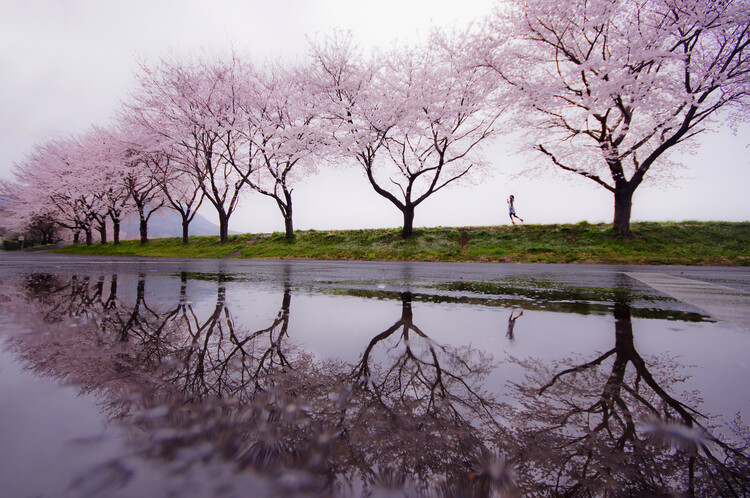 Art Photography Rain of spring