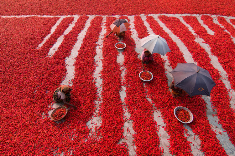 Art Photography Red Chilies Pickers