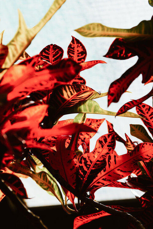 Art Photography Red leaves