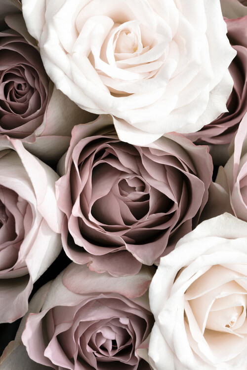 Art Photography Roses