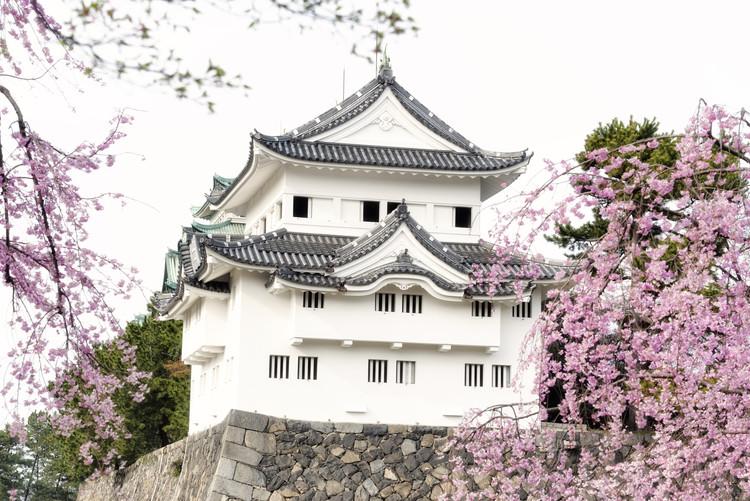 Taide valokuvaus Sakura Nagoya Castle