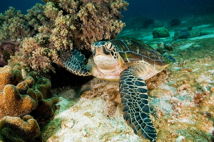 Art Photography Sea Turtle