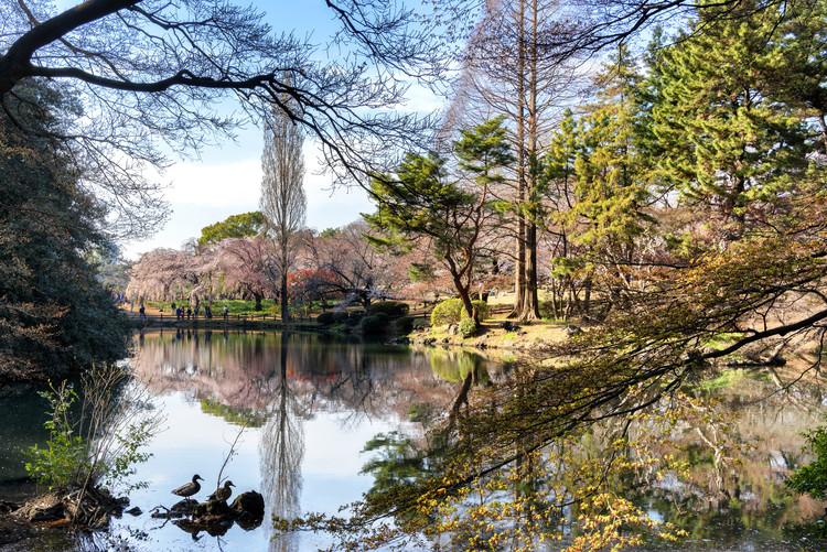 Art Photography Shinjuku Gyoen Park