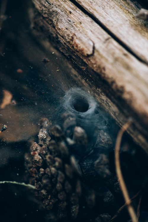 Art Photography Spider hole between wood