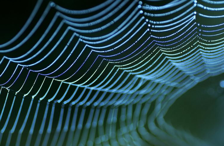 Art Photography Spider's web