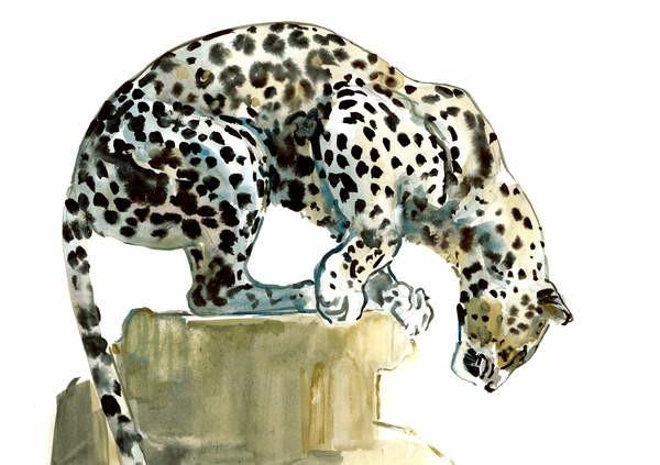 Fine Art Print Spine (Arabian Leopard), 2015,
