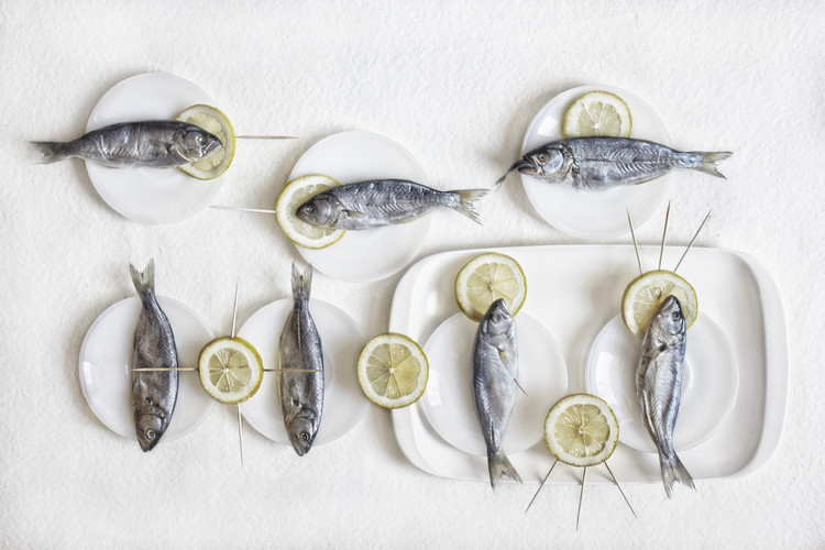 Art Photography Still Life with Fish