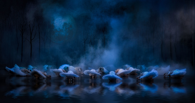 Art Photography Swans on the lake....