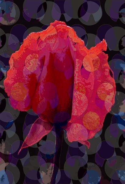 Fine Art Print Tea Rose 3b