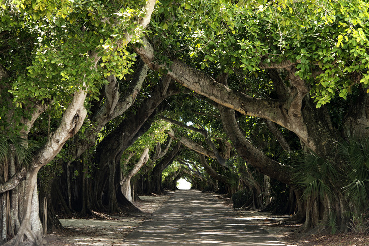 Art Photography The Beautiful Banyan Tree