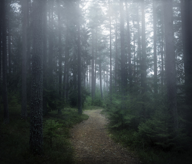 Art Photography The forest of secrets