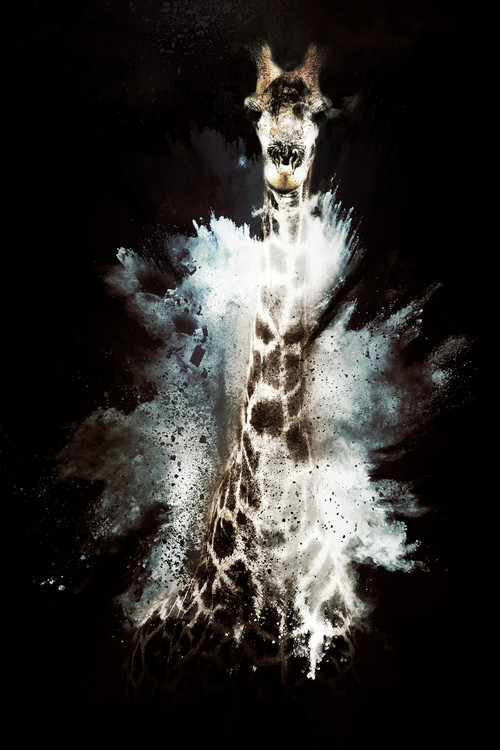 Art Photography The Giraffe