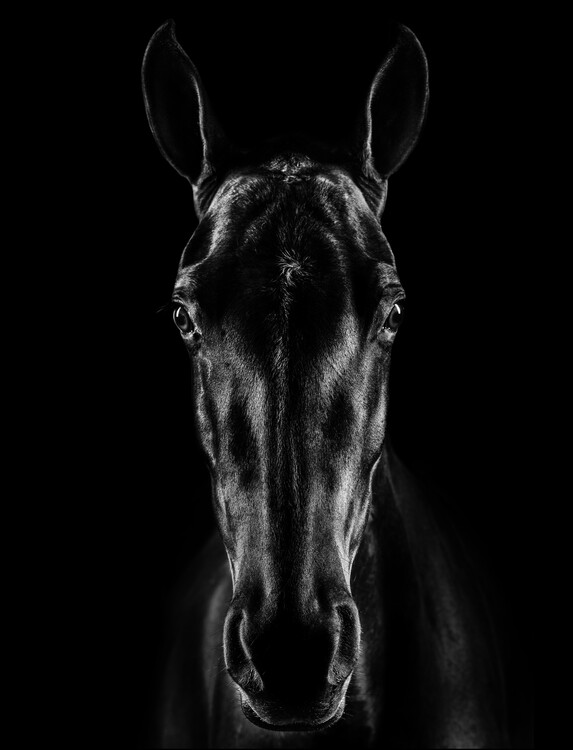 Art Photography The Horse in Noir