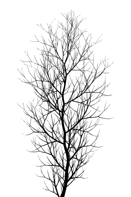 Illustration The Tree BLACK