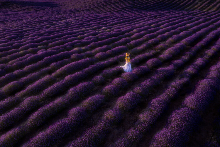 Art Photography The woman in lavender