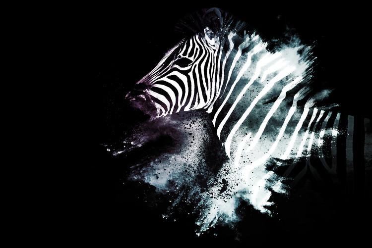 Art Photography The Zebra