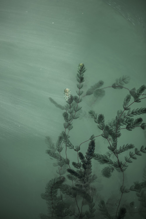 Art Photography Underwater plants