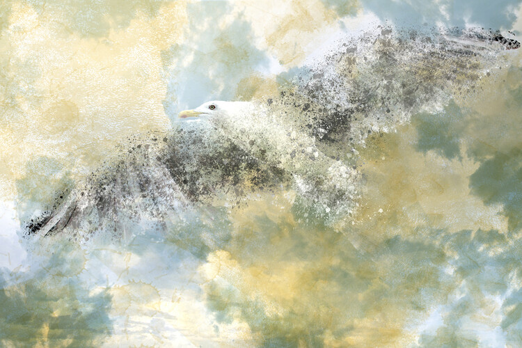 Art Photography Vanishing Seagull